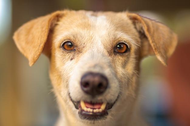 Horizontaal schot van een schattige en gelukkige bruine hond