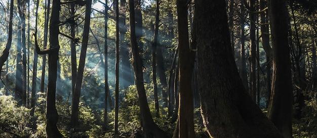Horizontaal schot van groene bomen en installaties in een bos