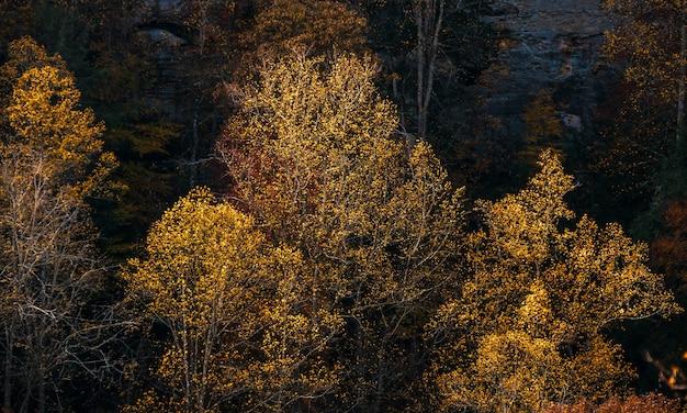 Horizontaal schot van hoge bomen met bladeren in dalingskleuren in het bos
