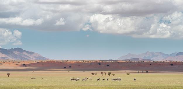 Horizontaal schot van landschap bij de namib-woestijn in namibië onder de bewolkte hemel