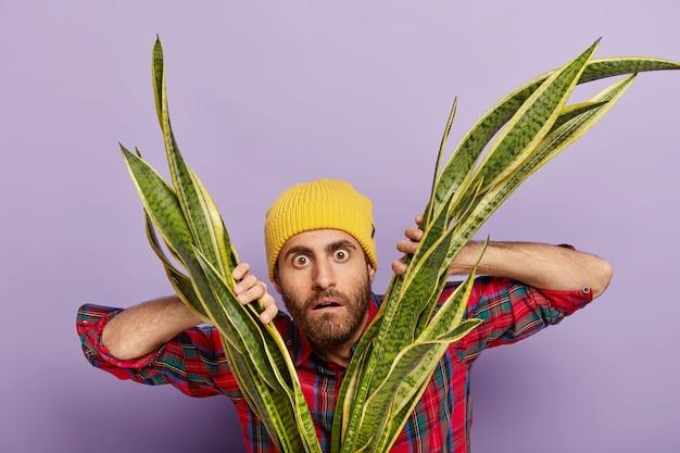 Horizontaal schot van verbaasde mannelijke botanicus of bloemist kijkt met geschrokken uitdrukking door sansiveria, voelt zich onder de indruk, draagt gele hoofddeksels en stijlvol shirt, zorgt thuis voor kamerplant.