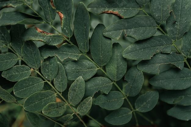 Horizontale achtergrond van enkele super getextureerde groene bladeren voor kopie ruimte