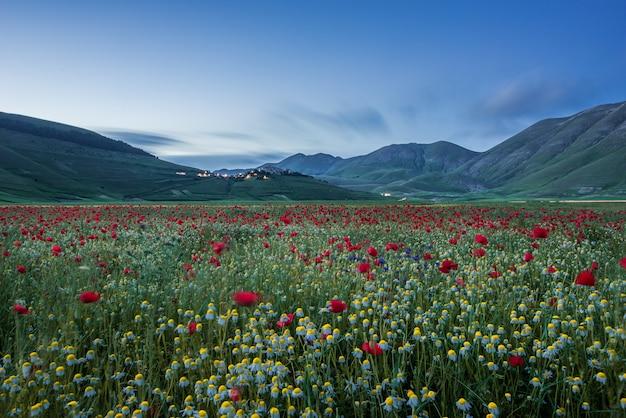 Horizontale opname van een enorm veld met veel bloemen en rode tulpen omgeven door hoge bergen