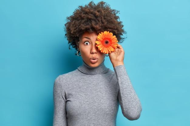 Horizontale opname van verbaasde afro-amerikaanse vrouw houdt oranje gerbera boven oogkijkers met afgeluisterde ogen houdt van bloemen gekleed in casual grijze coltrui geïsoleerd over blauwe muur
