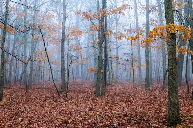 Horrorscène van een donker bos met blachbomen en blauwe mist