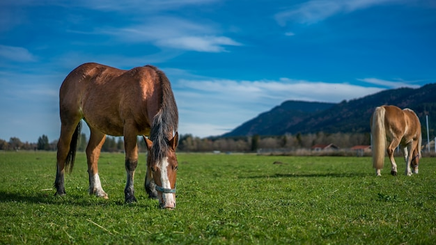 Horse grazing on green pasture