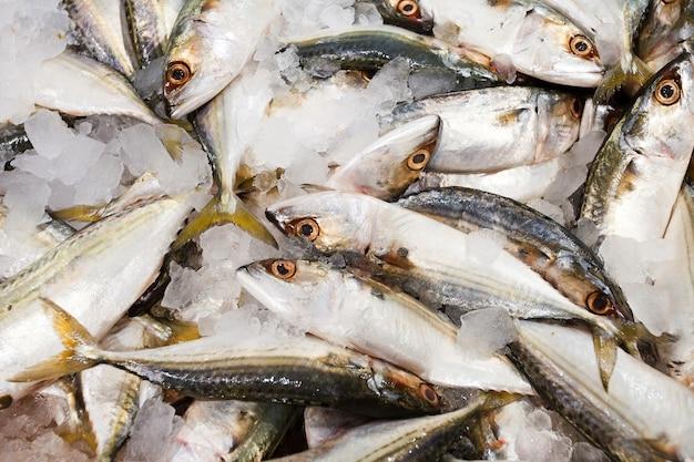 Horsmakreelvissen op ijs, vers ruw geheel gekoeld, bij de vissenmarkt, bokeh.
