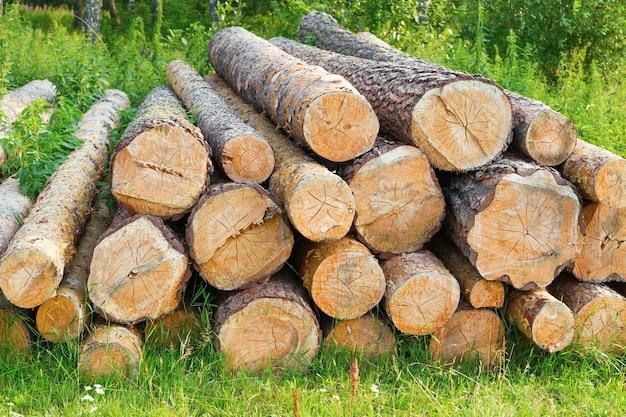 Hout. gevelde logboeken die op het gras in het bos liggen. pijnbomen hakten brandstofreserves.