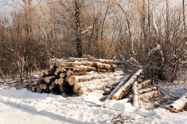 Hout in het winterseizoen. bedekt met sneeuw. logboekregistratie