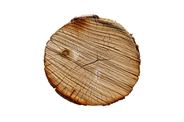Hout textuur. berkenstam met scheuren. ronde gesneden boom geïsoleerd op een witte achtergrond. hoge kwaliteit foto