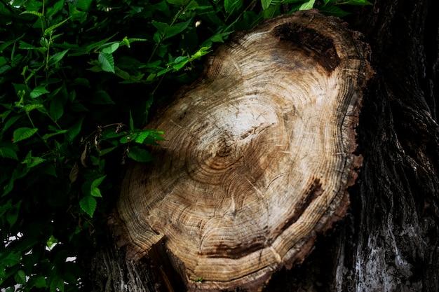 Hout textuur. big dronk uit een boom. oude boomstronk textuur