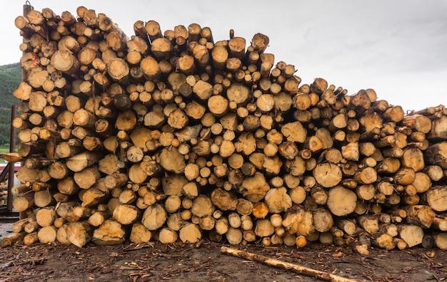 Hout van rondhout gestapeld in een stapel bij de zagerij