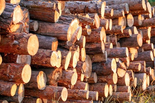 Houtblokken die uit het dennenbos zijn gehaald, liggen op een stapel