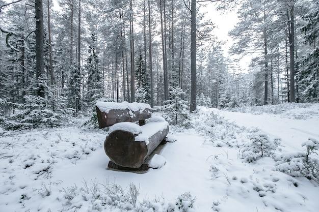 Houten bank in het winter park