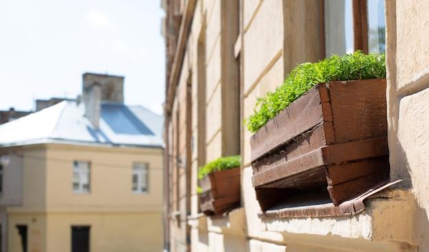 Houten bloempotten met groen gras buiten op het raam. ruimte voor tekst