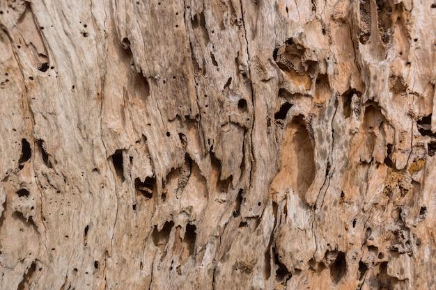 Houten boombederf van schade van de textuurachtergrond van de termietaard