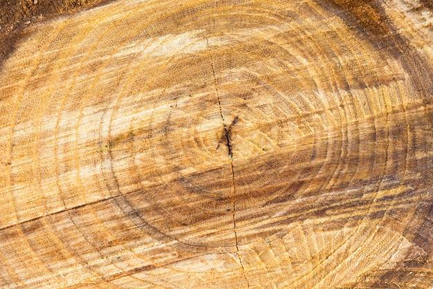 Houten boomstam textuur kan worden gebruikt voor achtergrond