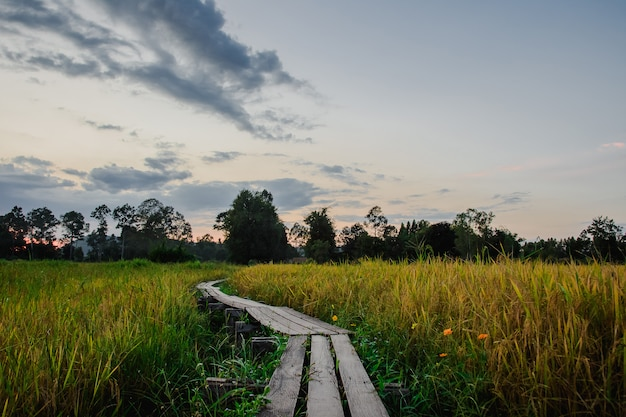 Houten brug 100 jaar oud, khok-grachai, khon buri in nakhon ratchasima in thailand.