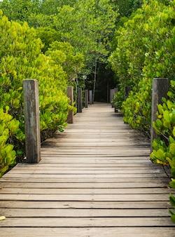Houten brug bij mangroven in tung prong-leren riem of gouden mangrovegebied, rayong, thailand