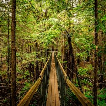 Houten brug die leidt naar een avontuurlijke wandeling midden in de bossen