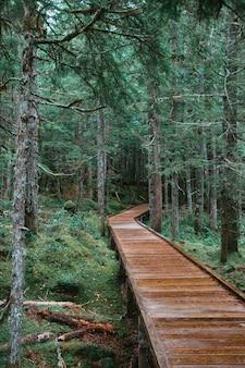 Houten brug in een bos dat door mossen en evergreens wordt omringd