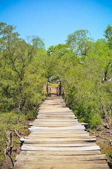 Houten brug in het mangrovemoeras, avellanas-strand, costa rica.