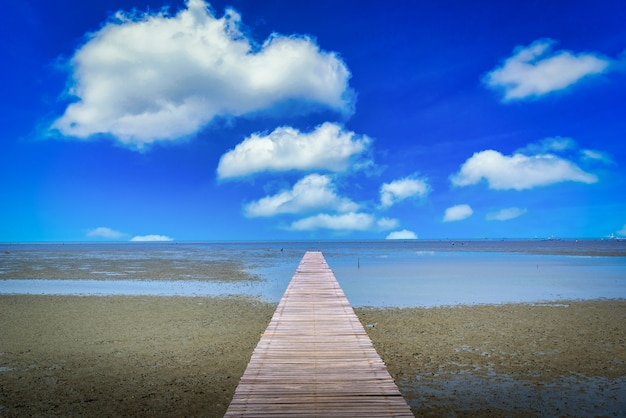 Houten brug in mangrovebos met blauwe hemelachtergrond.