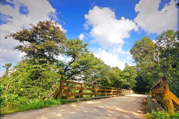 Houten brug met lommerrijke bomen