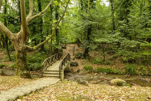 Houten brug over een smalle rivier in een dicht bos
