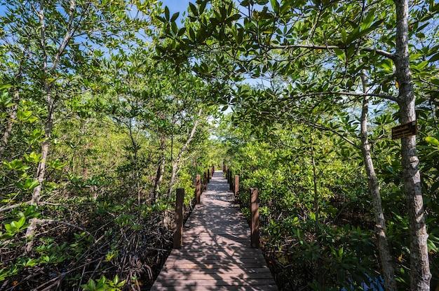 Houten bruggang bij kung krabaen-baai mangrovebos bij chanthaburi-stad thailand.
