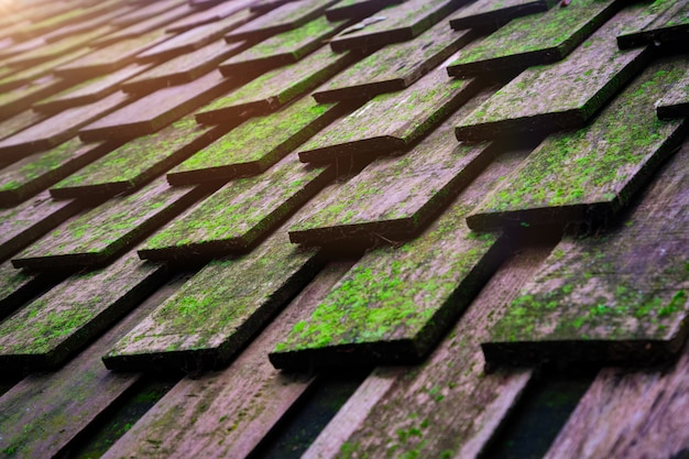 Houten dak gevuld met mos
