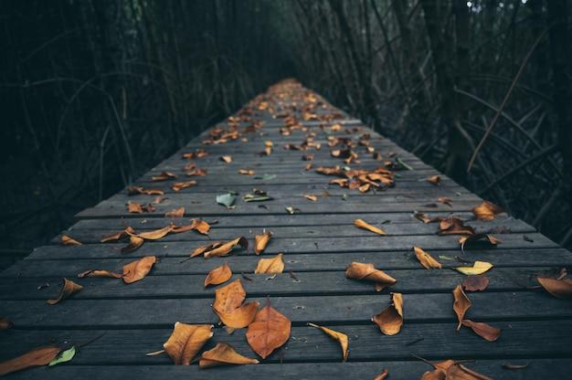 Houten gang in mangrovebos, voel de natuur, fris en ontspan