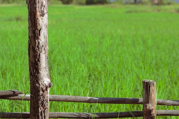 Houten hek in rijstvelden