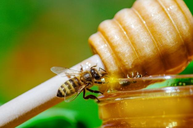 Houten honing beer en westerse honingbij. honey bee op aard. honing met vliegende honingbij
