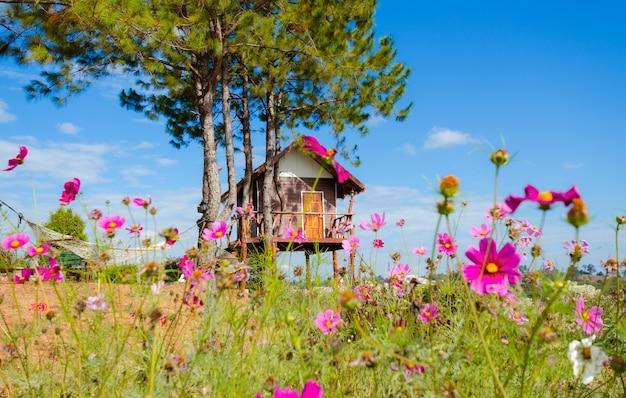 Houten hut in een veld van kleurrijke madeliefjes.