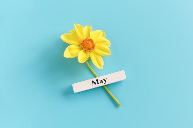 Houten kalender lente maand mei en gele bloem op een blauwe achtergrond. kopieer ruimte. minimale stijl.