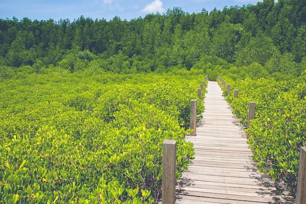 Houten kleine brug over het perspectief van het bosmangroveverdwijnpunt