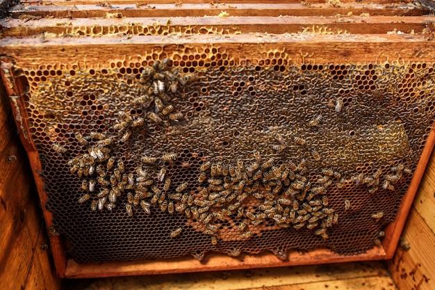 Houten kozijnen met honingraat in geopende houten bijenkorf