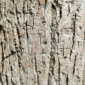 Houten log textuur