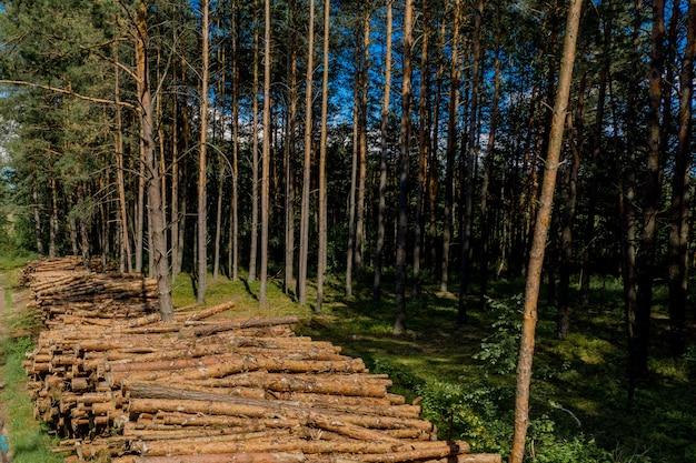 Houten logboeken uit een dennenbos
