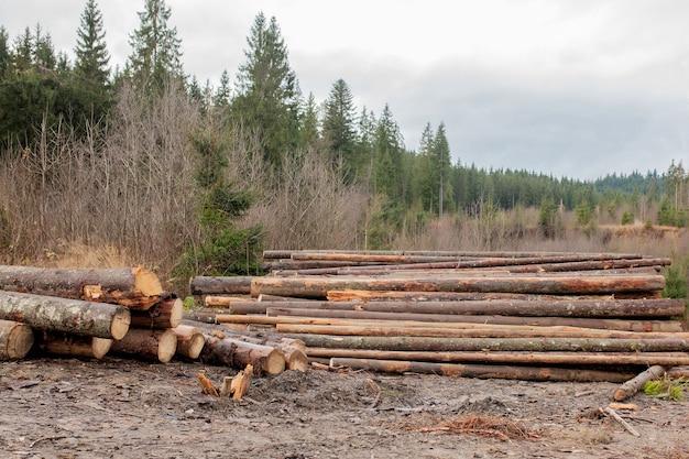 Houten logboeken van dennenbossen in het bos, gestapeld in een stapel. vers gehakte boomstammen gestapeld op elkaar in een stapel
