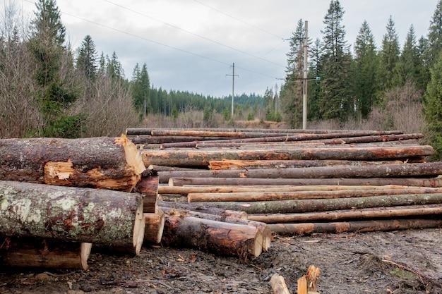 Houten logboeken van dennenbossen in het bos, gestapeld in een stapel. vers gehakte boomstammen op elkaar gestapeld in een stapel.