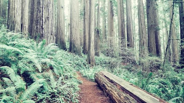 Houten login op grond van een groot bos
