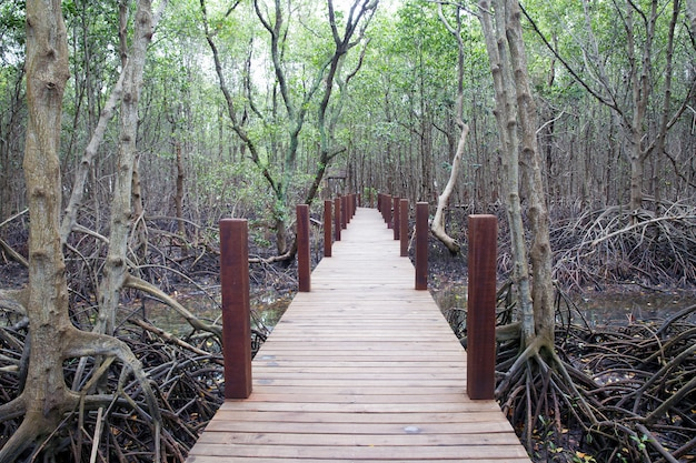 Houten loopbrug bij mangrovebos.
