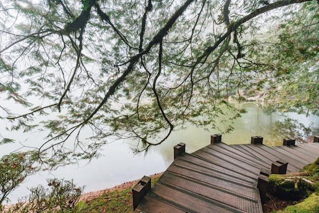 Houten loopbrug die leidt naar ceder- en cipressen in het bos met vijvers en mist op alishan national forest recreation area in chiayi county, alishan township, taiwan.