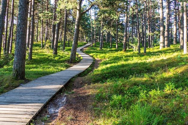 Houten loopbrug door het bos naar het strand