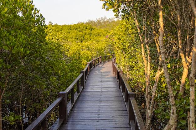 Houten loopbrug in het mangrovebos