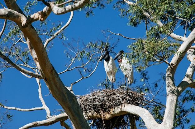Houten ooievaars die zich op een boom onder het zonlicht en een blauwe hemel bevinden