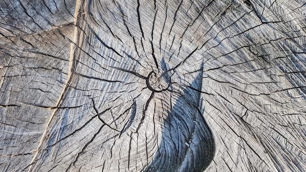 Houten oude stomp, houtstructuur achtergrond. gezaagde boom met scheuren. ronde omgehakte boom met jaarringen als houtstructuur.