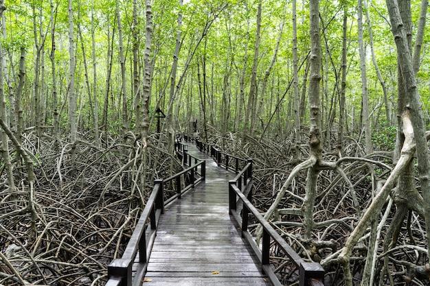 Houten pad in mangrove tropisch regenwoud